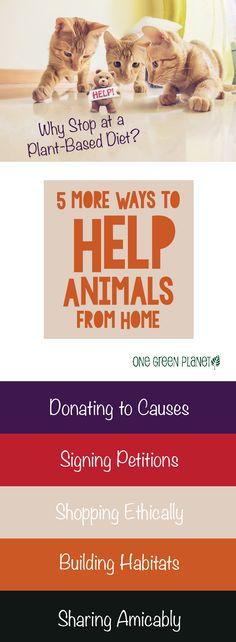 http://onegr.pl/1yZfmmS #vegan #vegetarian #plantbased #animals #helpanimals