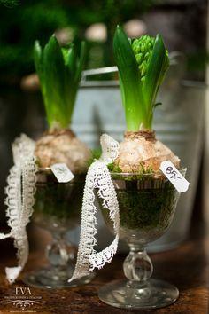 Hyacint i glas