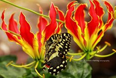 Butterfly and plants by Lewis Outing on 500px