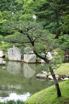 松の木、縮景園、広島 Pine Tree, Shukkei-en, Hiroshima