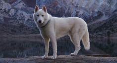 アメリカのイラストレーターJohn Stortzさんは彼の愛犬であるハスキー犬、ヴォルフガングと一緒に旅をし、その様子を撮影しています。 アメリカの様々な地域、特に大自然の中で撮影された写真が多く、真っ白なヴォルフガングと深い色彩の自然とのコントラストが非常に美しいです。宮崎駿監督の「もののけ姫」に登場する二本の尾を持つ白く大きな三百歳の犬神「モロの君」みたいですね。 大自然の中の勇ましい姿だけでなく、テントの中のリラックスした姿も撮影されていますよ。ヴォルフガング可愛い。 tumblrに多くの写真が掲載されていますので、ご覧ください。http://johnandwolf.tumblr.com/                        【次ページ】                ダラリ。。。  もののけ姫  もののけ姫 ウォルト・ディズニー・ジャパン株式会社Amazonで詳細を見る