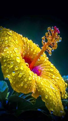 good morning you sweet, gorgeous, open minded woman. You are always with me 💋💕 Breakfast alone radio Morning Love Quotes, Good Morning My Love, Morning Greetings Quotes, Good Morning Photos, Good Morning Messages, Good Morning Wishes, Morning Msg, Hawaiin Flowers, Hibiscus Flowers
