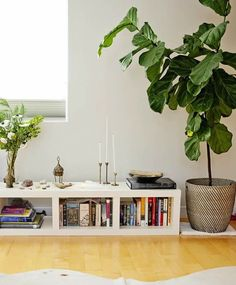 Tips for Growing Fiddle Leaf Figs