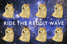 How To Make Your Pet Internet Famous #Refinery29