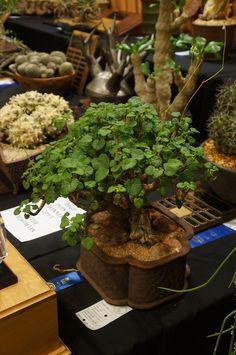 https://www.flickr.com/photos/flora_critters/shares/p46R5Z | Laurel Woodley's photos