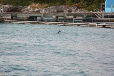 Lua-de-mel – Enfim Noiva | Blog de Casamento-Cancun-nadar com golfinhos