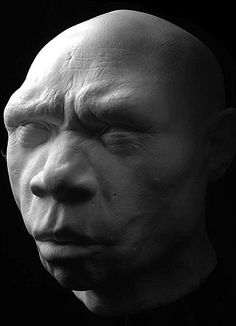 The discovery of this adult male in Sima de los Huesos, Spain, in 1993 points to an early stage in the evolution of neanderthal man due to the shape of his face. 'Miquelon' was around 1.75m tall and lived about 500,000 to 350,000 years ago. His remains were found with that of 31 others which led researchers to believe this was a burial site