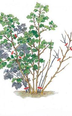 Erntezeit für Johannis- und Stachelbeeren                                                                                                                                                      Mehr Green Magic, Love Garden, Plant Care, Agriculture, Vegetable Garden, Gardening Tips, Nature, Flowers, Painting