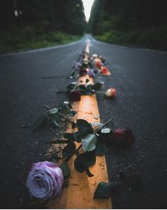 Wallpaper - Path of lovely roses, road to you. Sunflower Wallpaper, Rose Wallpaper, Tumblr Wallpaper, Nature Wallpaper, Wallpaper Backgrounds, Tumblr Photography, Creative Photography, Amazing Photography, Nature Photography