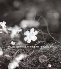 An Artist's Canvas by Stacey Zimmerman: Nature's Perfection- Snowflakes Magnified