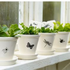 Modern Botanical Plant Pots and Dishes | Pale & Interesting