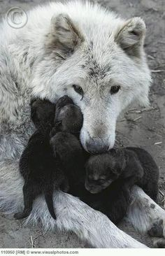 White Wolf Family                                                                                                                                                                                 More