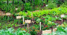 Vegetable Garden For Beginners, Starting A Vegetable Garden, Gardening For Beginners, Vegetable Gardening, Gardening Tips, Veggie Gardens, Companion Planting Chart, Garden Boxes, Garden Ideas
