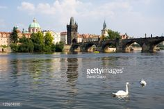 Stock Photo : Waterside view of Charles Bridge, swans swimming in the foreground, Prague, Czechoslovakia, Czech Republic, Europe