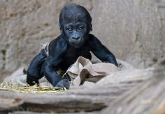 Baby zoo animals, February 2014