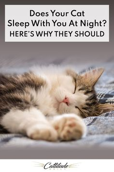 Pet Quotes Cat, Animal Quotes, Cat Info, Kitten Care, Cute Cats And Kittens, Fluffy Kittens, Cat Behavior, Cat Sleeping, Cat Facts