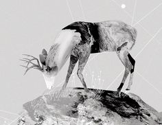 """Nastplas are two freelance illustrators and designers from Madrid. DrFranken, Software developer, and Natalia Molinos, decorator, interior. Freelance Illustrator, Software Development, Illustrators, Hunting, Graphic Design, Inspired, Wall, Artwork, Inspiration"