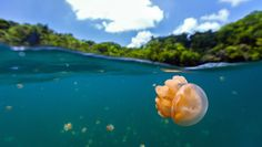 Lonely Planet: Best in Travel 2016 - Palau Lonely Planet, Amazing Destinations, Vacation Destinations, Vacation Ideas, Marine Ecosystem, Destination Voyage, Fauna, Winter Travel, Canada Travel