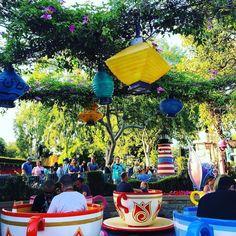 #teacups #madteaparty #merryunbirthday #disney #disneygram #disneyland #disneylandap #disneyland60 #disneylandresort #disneyparks #fantasyland #aliceinwonderland #alice #spinningteacups by ocdisney19