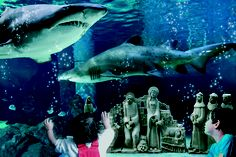 L'acquario di Cattolica, il presepe sott'acqua. The Cattolica Aquarium, the crib the crib in the shark tank