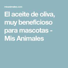 El aceite de oliva, muy beneficioso para mascotas - Mis Animales