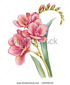 Image result for freesia drawing