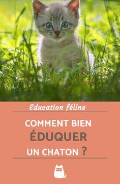 Si vous allez ou venez d'adopter un chaton, alors vous devez savoir comment l'éduquer correctement. Pour obtenir tous nos conseils et apprendre comment bien éduquer un chaton, cliquez sur l'image !   #kittens #kittenplay #kittenspace #chatnoir #animauxdecompagnie #education #comportement #art #chats
