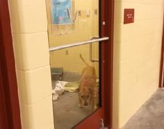 Squeaky must be growing impatient to find her forever family because staff at the Great Plains SPCA kept finding her running freely in the adoption area. The staff finally figured out how Squeaky was escaping when they caught her in the act...