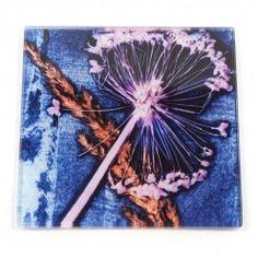 Gillian Arnold Blue Alium Rush Glass Coaster