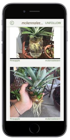 "Download the free social plant app GrowIt! and follow users like ""mckennaleeann"" to learn how to do things like grow your own Pineapple! There are all sorts of neat tips and tricks out there. No matter which sorts of plants you're into, GrowIt! has something for you!"
