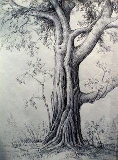 pen and ink trees | Maple Tree by Georges St Pierre