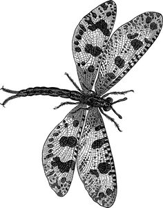 detail - Insects vector designs Dover Publications