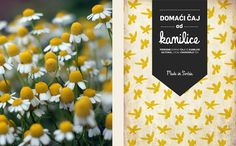 Packaging of the World: Creative Package Design Archive and Gallery: Domaci Caj Concept