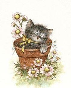 gatos - Isabel Brioso - Álbumes web de Picasa