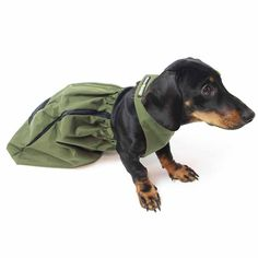 Great for protecting the chest and limbs of dogs with hind leg paralysis. It enables the dog to drag himself around. It prevents urine infections and sores Diy Dog Wheelchair, Paralyzed Dog, Disabled Dog, Ibizan Hound, Dog Care, Disability, Dachshund, Your Pet, Pup
