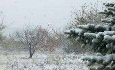 to powyżej, to nie jest kartka pocztowa ani żadne stockowe foto. to zdjęcie, które zrobiłam dzisiaj rano, stojąc przed własnym domem. nie ma na nim żadnych filtrów ani poprawek – właśnie tak wyglądał zimowy krajobraz, spod którego przebijały jeszcze resztki kolorowej jesieni. i był naprawdę przepiękny.