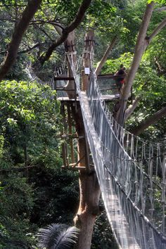 FRIM is a forest near Kuala Lumpur (30 min drive). Here you have a great Canopy Walk, with fantastic views over KL City Center. This is truly a must visit attraction in Kuala Lumpur...