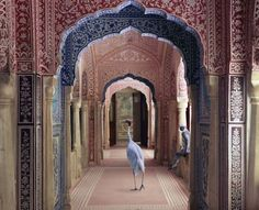 Karen Knorr's Photographs of Sacred Indian Interiors Consider Caste, Femininity, And it's Relationship To The Animal World