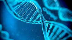 Here are the facts about your DNA. Read the article to know the weird and intersting facts about DNA. Also read to know the amazing facts about DNA. Ati Teas, Teas 6, Teas Test, Human Dna, Human Genome, Human Body, Dna Repair, Gene Therapy, Rare Disease