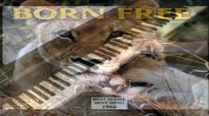Born Free - Theme - Piano
