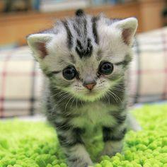 ショボーン・・・。世界一悲しい顔をしたネコが北京で発見される。 - FEELY