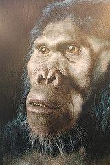 Homo habilis. entre 2,33 et 1,4 Ma.