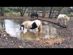 How To Make a Great Waterhole for Your Paddock Paradise or Pasture | LISTEN TO YOUR HORSE