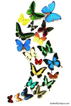 Real Butterfly Wall Art