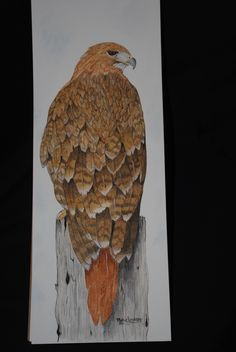 A red tailed hawk I water colored.  I just love painting birds.  This woman is the most artistic person I know!!!  I believe this to be my animal totem.