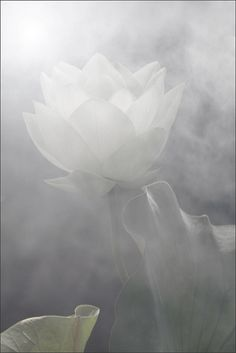 The Enchanted Lotus Collection  #InspiredByNature