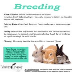 Young Living Essential Oils for Rabbit Breeding. www.facebook.com/YoungLivinghasanoilforthat