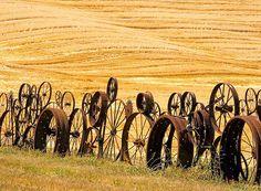 Dahmen Barn wheel fence against the golden wheatfields of the Palouse region. The historic Dahmen Artisen Barn, Uniontown, Washington.