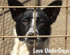 Love UnderDogs is one of the main UK organisations helping the stray dogs in Romania. Many have terrible injuries. They need your help. Dog Charities, Can You Help, Stray Dog, Romania, Dogs, Animals, Organizations, Animales, Animaux