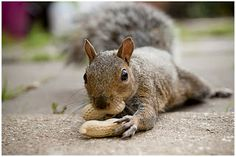 Living like a tourist: January 21: Today is Squirrel Appreciation Day!